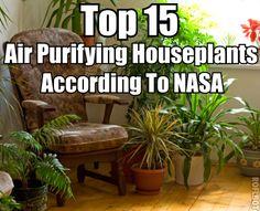 Top 15 Air Purifying Houseplants According To NASA