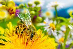 Med a peľ – prírodné antioxidanty a proteíny