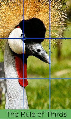 Even if you think the Rule of Thirds is outdated, it still is an important cornerstone in photography basics. http://www.mentormob.com/oberon/mob/photography/hobbyist-photographer-2/composition-in-photography/law-of-thirds-for-composition