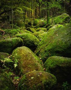 isawatree:Big green Pebbels by Kirsten Karius