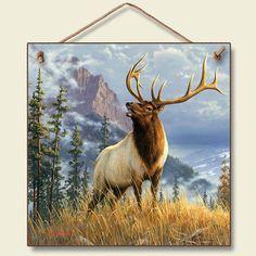 Another Bull Elk