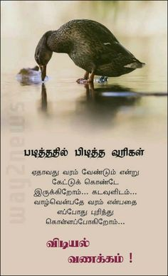 Good Afternoon Quotes, Good Morning Messages, Good Morning Images, Good Morning Quotes, Motivational Stories In Tamil, Short Inspirational Quotes, Motivational Quotes For Life, Positive Quotes, Osho Quotes On Life