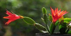 Atlas Çiçeği Bakımı Nasıl Yapılır? Bonsai, Mandala, Plants, Craft, Hanging Succulents, Plant, Mandalas, Planets, String Garden