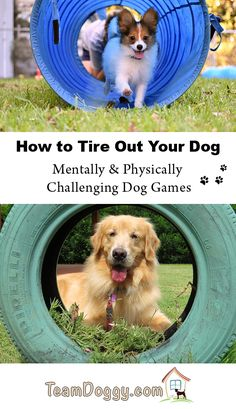 Have an active dog? These fun dog games can help you tire out a dog that has a bit too much energy. Mental & physical stimulation is important for dogs especially when they are puppies. These dog games challenge them and give them some fun too. Games For Puppies, Brain Games For Dogs, Dog Games, Dogs And Puppies, Hyper Dog, Dog Enrichment, Dog Yard, Dog Activities, Elderly Activities