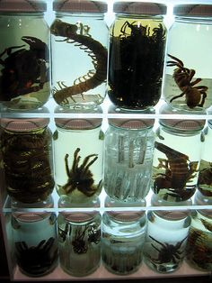 Wet Specimens