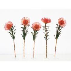 The Protea - Pincushion! Protea Art, Protea Flower, Hiking Tattoo, Nature Sketch, Tattoo Set, Botanical Prints, Pin Cushions, Flower Tattoos, Bloom
