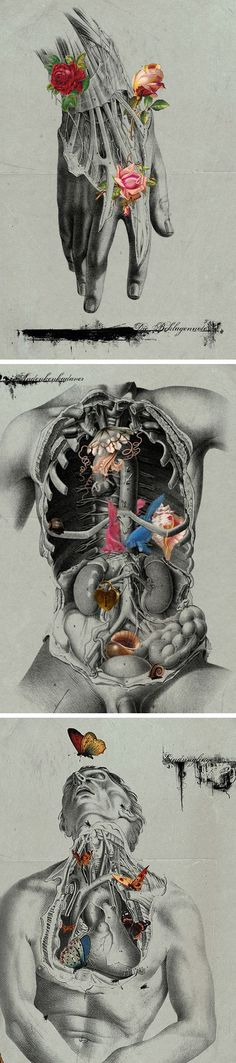 Michele Parliament combines human anatomy and natural scientific illustration to create fascinating surrealist hybrid images. Art And Illustration, Art Inspo, Kunst Inspo, Arte Com Grey's Anatomy, Anatomy Art, Human Anatomy, Anatomy Organs, Art Du Collage, Digital Collage