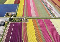 Tulip landscape, quilt inspiration