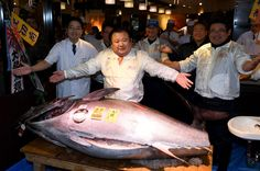 New year's first auction at the Tsukiji shish market  In the New Year auction of the frozen tuna at the Tsukiji fish market in Tokyo on January 5. Kiyoshi Kimura, the president of sushi restaurant chain Sushi-Zanmai, bought a 212-kilogram bluefin tuna with a 74 million yen (633,000 USD) at the first tuna auction this year.  Same day in 2013, Kiyoshi Kimura made a record spend 155 million yen (1,320,000 USD) for a 222-kilogram bluefin tuna. It became an excellent advertisement for his…
