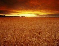 "The Sandhills in Eastern Nebraska USA ""Untouched beauty. State Of Kansas, Kansas City, Kansas Ks, Oklahoma, Miss Kansas, Fields Of Gold, Land Of Oz, Sea To Shining Sea, Home On The Range"