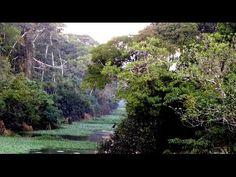 Amazon Rainforest river obstruction