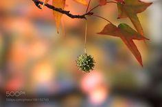 Fruit by Akiatoshiaki. @go4fotos: