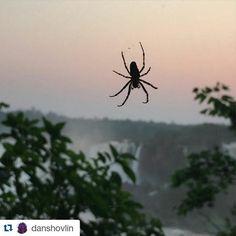 Fotografía por: @danshovlin #cataratasarg #traveling #trip #instalike #araña…