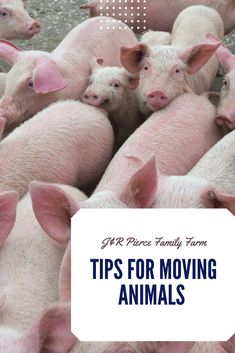 Are you moving sheep, cattle, pigs, or chickens? No matter what kind of animal you need to t Raising Ducks, Raising Rabbits, Raising Goats, Herb Garden Design, Diy Herb Garden, Commercial Farming, Farm Projects, Raised Garden Beds, Raised Bed