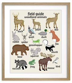 Woodland Nursery Art, Animal Poster