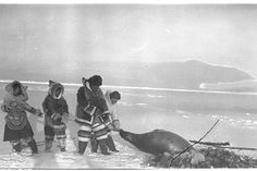 Kooyoo, Ashevak, Peter Pitseolak, and Pingwartok pulling a Seal from the ice - Inuit - 1944