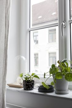 Adding more and more plants to our living room window sill to make up for the rainy weather we have been having here in Munich. Beautiful Interior Design, Office Plants, Window Sill Decor, Windows, Window Sill, Modern Cozy Living Room, Home Deco, Window Ledge, Indoor Plants