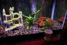 Aquarium decoratie is een goede toevoeging voor het aquarium