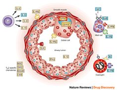 Emerging immune targets for the therapy of allergic asthma