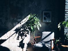 Urocze drzewko z pniem splecionym w warkocz i soczyście zieloną koroną z liści ułożonych jak palce w dłoni. Jest bardzo odporny na zarobionych opiekunów i wybaczy wiele. Nie lubi jedynie nadopiekuńczego przelewania i potrącania, które mogłoby po prostu odłamać mu delikatne liście. Vertikal Garden, Pachira Aquatica, Warehouse Apartment, Indoor Plants, Planters, Interior Design, Studio, Blog, Gardens