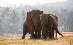 Lovely African Elephant Couple Download Pics For Ipad Wallpaper