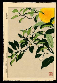Kuzuhara Teru - Nº 35 (From 'Native Flowers') Plant Aesthetic, Aesthetic Art, Botanical Drawings, Botanical Prints, Asian Flowers, Kunst Poster, Japanese Painting, Chinese Painting, Art Hoe