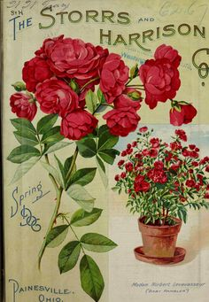 Painesville Nurseries :  Spring 1906 Seed Catalogue  - Storrs and Harrison Co.