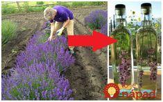 Ak vám v záhrade kvitne levanduľa, alebo máte doma sušené kvietky, toto je najúžasnejší spôsob, ako ich využiť. Lavender Flowers, Purple Flowers, Evergreen Shrubs, Green Garden, Holi, Flower Arrangements, Diy And Crafts, Gardening, Outdoor Decor
