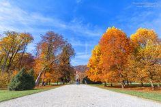 Erlebe Graz von ihrer schönsten Seite im Herbst. Sidewalk, Country Roads, Pictures, Autumn, Tips, Nice Asses, Side Walkway, Walkway, Walkways