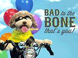 Bad to the Bone - That's you! Happy Birthday!