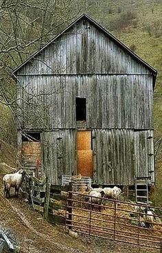 Barn, Hay & Sheep