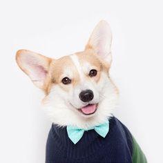 @winnythecorgi so handsome as always in his @little_green_caravan bow tie! #etsy #handmade #bowtie #dogaccessories #petaccessories #dailydog #dogbowtie #doggybowtie #corgi #corgilove #lovemydog by little_green_caravan