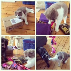 """Luna and Ripley are loving today's @CatHampurr delivery!"""