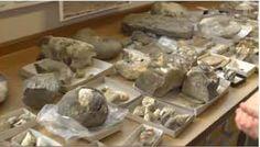 Seymour Island Late Cretaceous fossils.