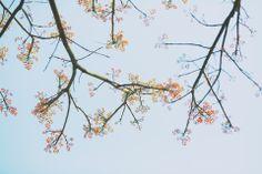 春天 怎么能没有花 怎么能不清新一下 - 花卉, 植物, 小清新, 色彩, 佳能, 大光圈 - 咸魚Henry - 图虫摄影网
