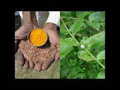 Medicinal Rice P5O Formulations for Jansenella Excess: Pankaj Oudhia's M...