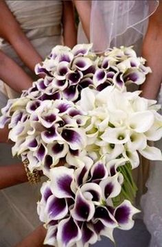oooh! purple and white in the same flower -- picasso calla lilies. Saw this flower and used it as accent in arrangements.