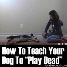 How To Teach Your Dog To Play Dead	►►	http://lovable-dogs.com/how-to-teach-your-dog-to-play-dead/?i=p