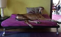Dali' on his bed ,the legs ,aluminum 's ,from my model of his paws. lucillabollati.com