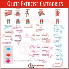 Best Glue Exercise Graphic EVER from BodyLogIQ and Bret Contreras