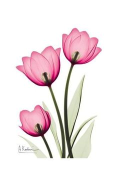 Adesivo de unha tulipa Watercolor Flowers, Watercolor Art, Flower Drawing Images, Flower Drawings, Oxalis Triangularis, Tulip Tattoo, Plant Drawing, Fabric Painting, Flower Art