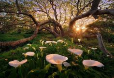 Image sunlight trees landscape forest sunset flowers garden nature grass branch blossom spring calla lilie in Admin's images album Beautiful World, Beautiful Places, Beautiful Pictures, Beautiful Sunset, Beautiful Morning, All Nature, Amazing Nature, Spring Nature, Mother Earth