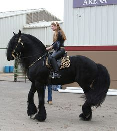 I have always wanted a Friesian. They are the most beautiful horses to me. Big Horses, Black Horses, Cute Horses, Pretty Horses, Horse Love, Beautiful Creatures, Animals Beautiful, Cute Animals, Large Animals