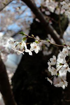 Kyoto, Japan 御射山公園 (Photo : Gallery I) https://www.facebook.com/Kyoto.GalleryI?ref=br_rs