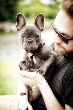 Tumblr.  I WOULD LOVE a blue frenchie they're so cute!
