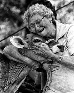 Cow love~ they really are sweet, gentle creatures-- unless you mess with their calf!