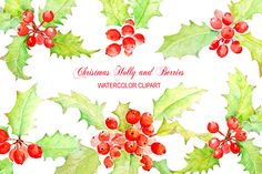 Watercolor Clip Art Holly Berry