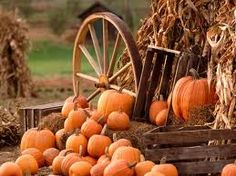 pumpkins crates hay