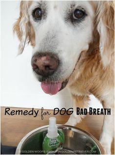 Remedy for Dog Bad Breath #TropiCleanFresh Breath Drops #ad