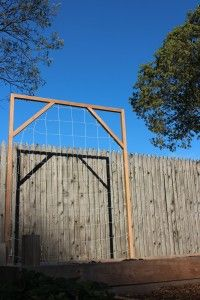How to build a trellis for vertical gardening and increased yields!
